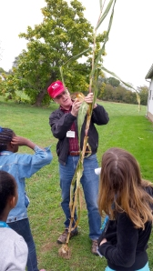 Dave showing the parts of a corn stalk.