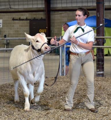 white steer 2